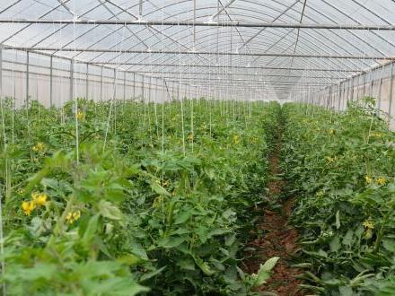 惊!山西某智能农业终于拥有大棚温湿度监控系统