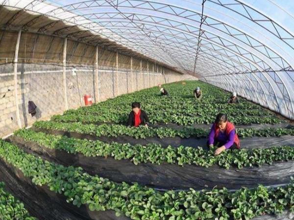 浅谈蔬菜大棚种植环境监控系统方案