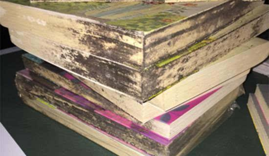 发霉的书籍