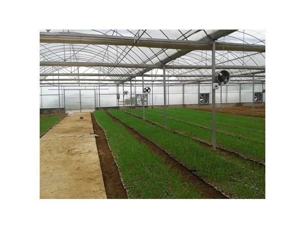浅谈农业大棚温湿度检测系统